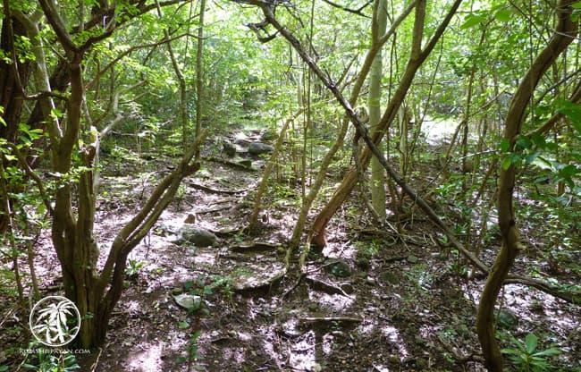 Anse La Roche Trail