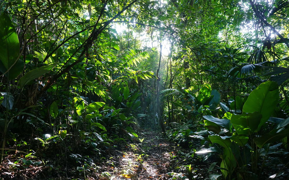 hiking on st. lucia