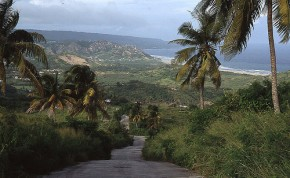 Barbados Cherry Tree Hill