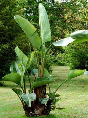 going on vacation how to take care of tropical plants