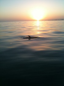 Sanibel Dolphin photo