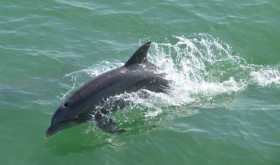 Fort Myers Dolphins