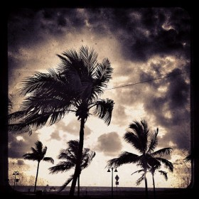 Palm tree photos