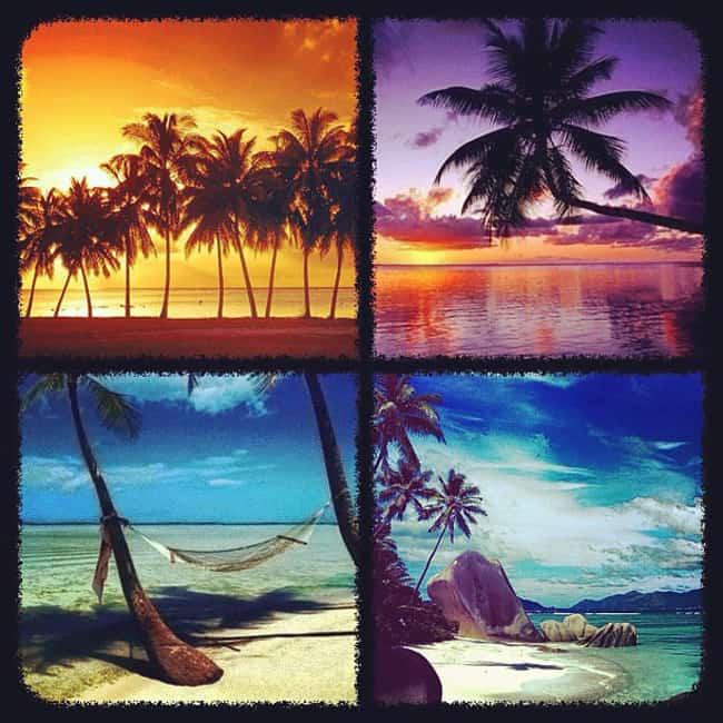 Palm tree photos
