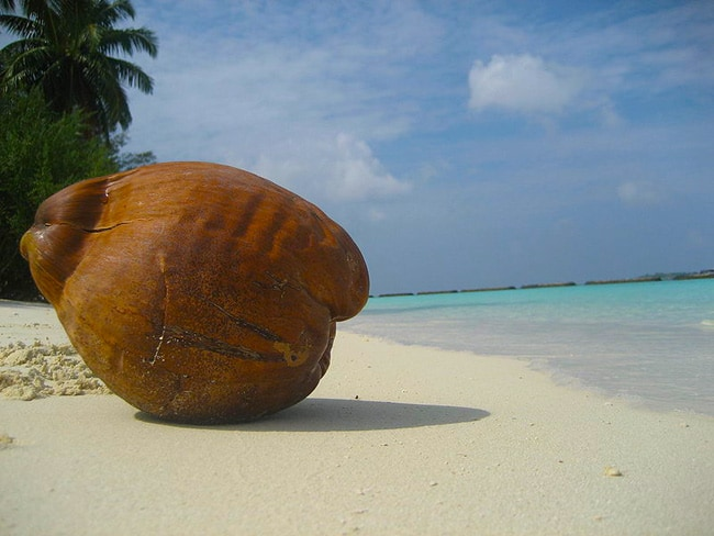 Beach Coconut