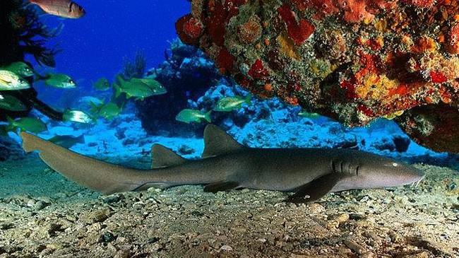 BVI Dive snorkel spots
