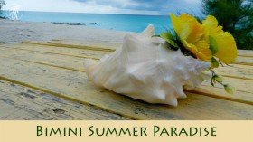 Video: A Bimini Summer Paradise Tour