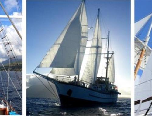 Setting Sail With Sagitta and Island Windjammers