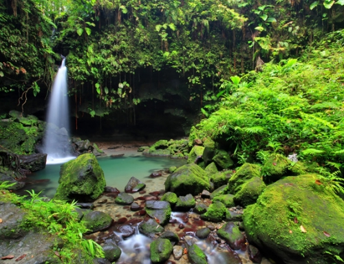 5 Experiences Not To Miss On Dominica
