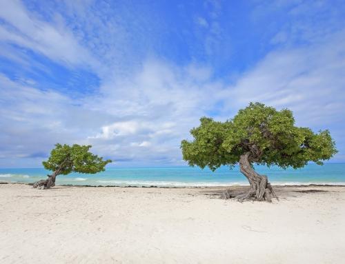 Aruba: A Real Life Daydream