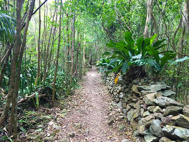 Reef Bay Trail St. John 1