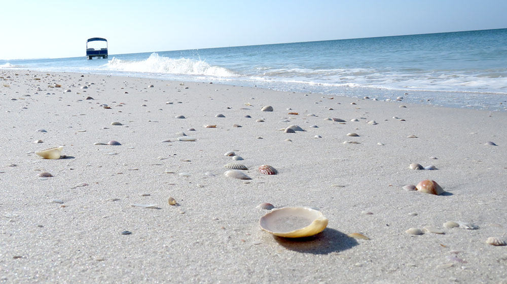 sea-shells-on-beach-north-captiva