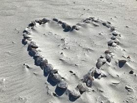 Florida Gasparilla Island Boca Grande Seashells