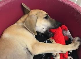 Potcake Potcake Place Animal Shelter Dog Rescue Animal Rescue Turks and Caicos