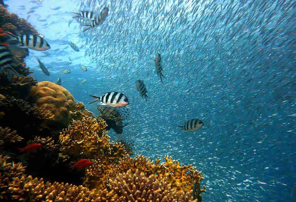 Where to dive in belize
