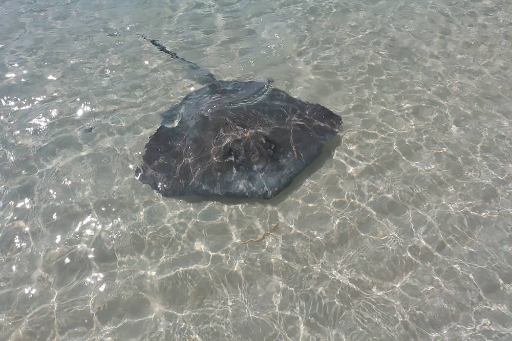 Stingray, Chat N'Chill, Beach Bar, Exumas, Stocking Island
