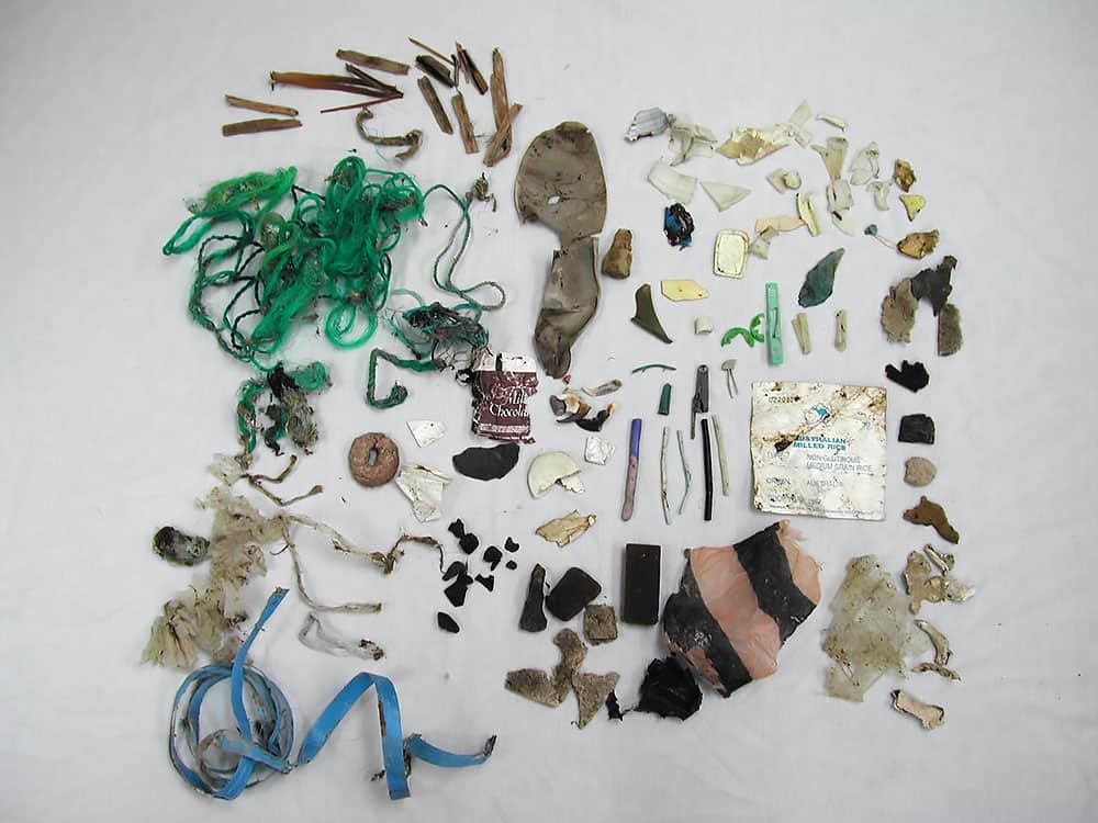 sea turtles, trash, turtle hospital