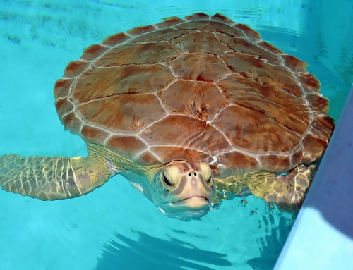 A Trip To The Hospital…Turtle Hospital That Is.