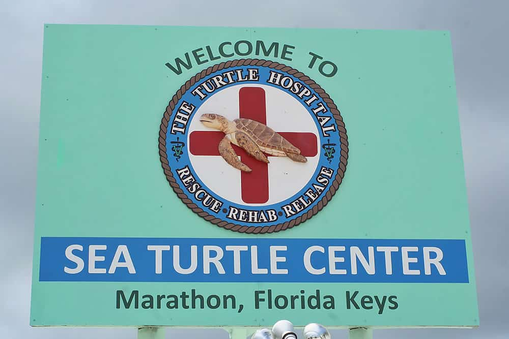 Marathon, Florida Keys, Turtle Hospital, Rescue, Rehab