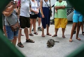 Hemingway House, Cats, Key West