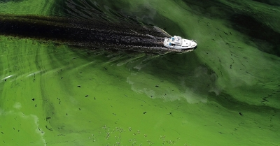 Green Algae Bloom, Lake Okeechobee Release, Toxic Water