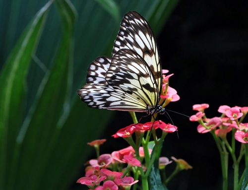 Key West Butterfly Conservatory – A Tropical Island Fairy Tale