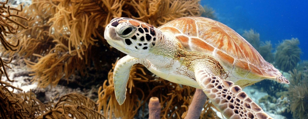 bonaire best things to do