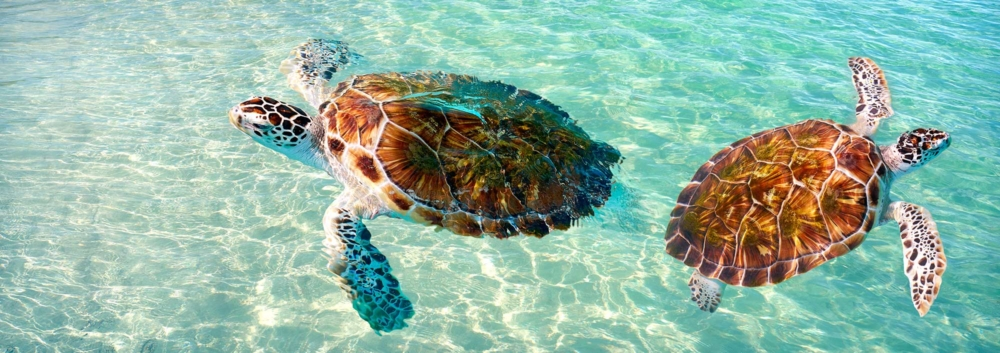 Mexican Caribbean best things to do