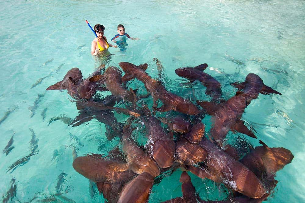 Swim with sharks bahamas